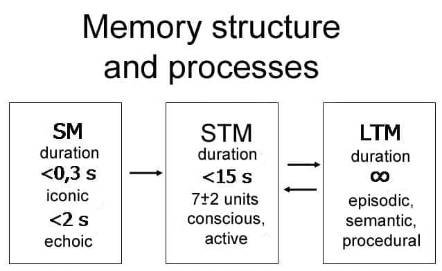 Image result for sensory memory